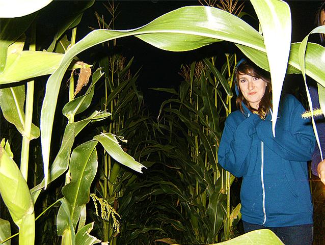 Wolfe Island Corn Maze, Ontario