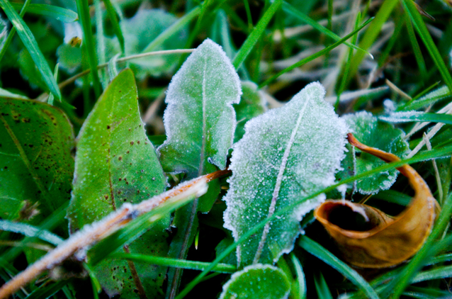 frost, winter, Kingston, Ontario