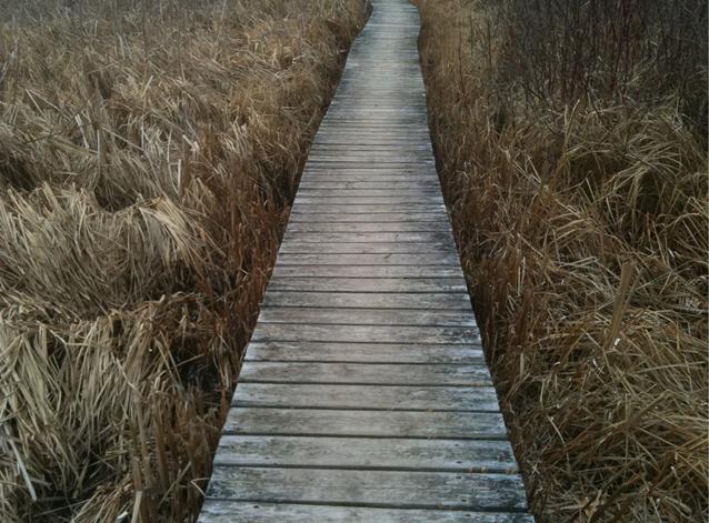 the Rideau Trail, hiking in Kingston, Ontario