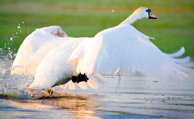 wildlife photography, Purdy Water, Murvale, Kingston, Ontario