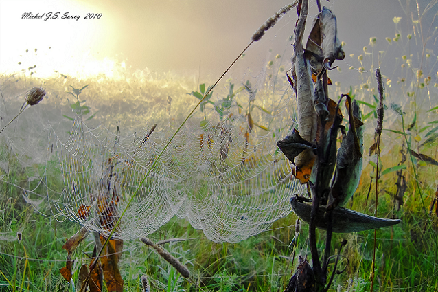 LeMoine Point, Spiderweb, end of summer, Kingston, Ontario