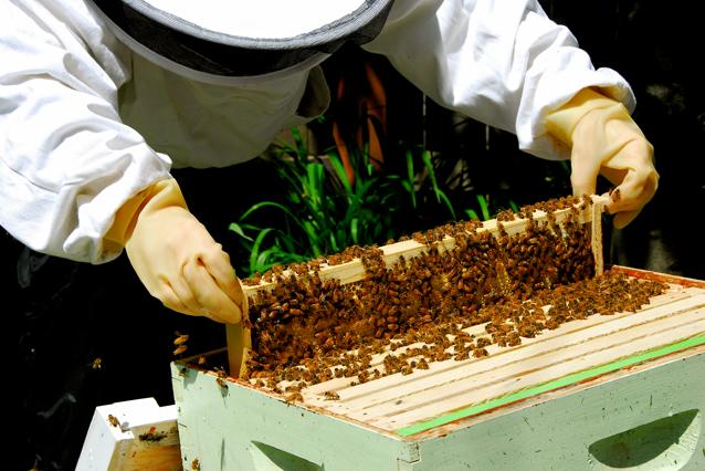 urban bee keeping, backyard gardening, Kingston, Ontario