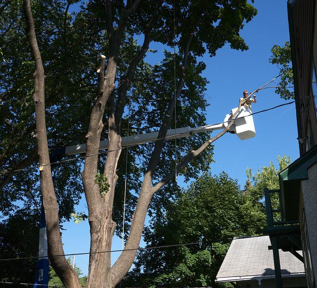 Tree cutting, bylaw, Kingston, Ontario