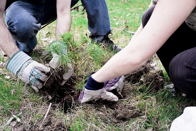 tree planting, Kingston, Ontario