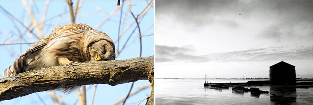 Kingstonist's Greatest Photo Contest