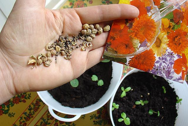 Plant your garden, indoor garden, start from seed