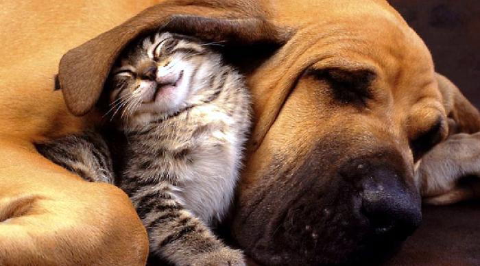 Best Animal Hospital in Kingston, Ontario, veterinarians