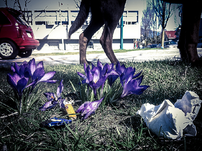 spring thaw, clean up, garbage