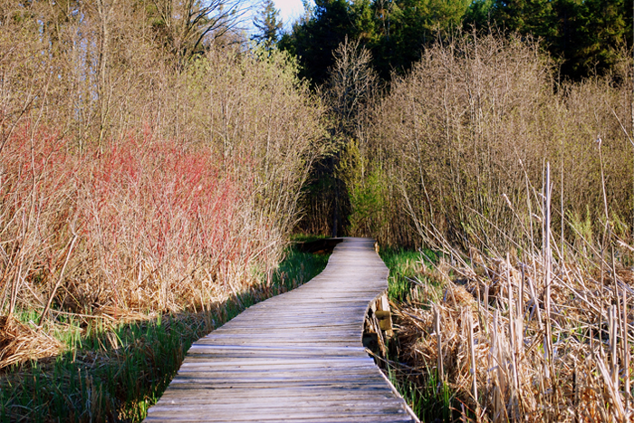 Kingston Trails, The Rideau Trail