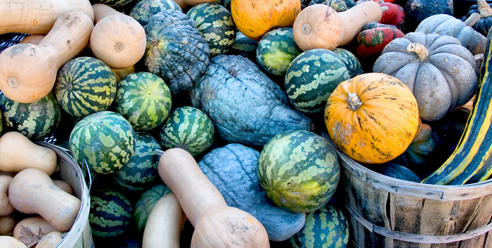 ygkchallenge, farmers' market, local, Thanksgiving, Kingston, Ontario