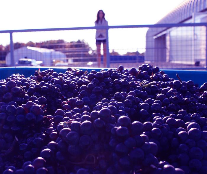 best winery in prince edward county, taste trail, picton, wellington, kingston