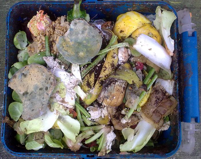 Green Bins to Focus on Food Waste, yard waste, Kingston, Ontario