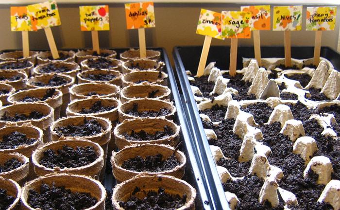 Grow a Row, Kingston, Ontario
