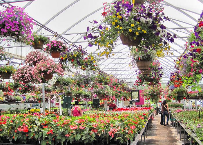 Guide To Kingston Garden Centre, Kingston, Ontario