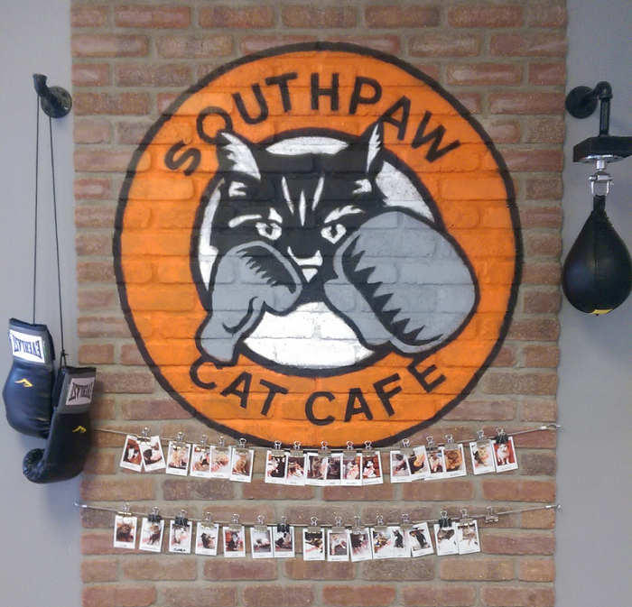 Southpaw Cafe, cat cafe, Kingston Animal Rescue, Kingston, Ontario