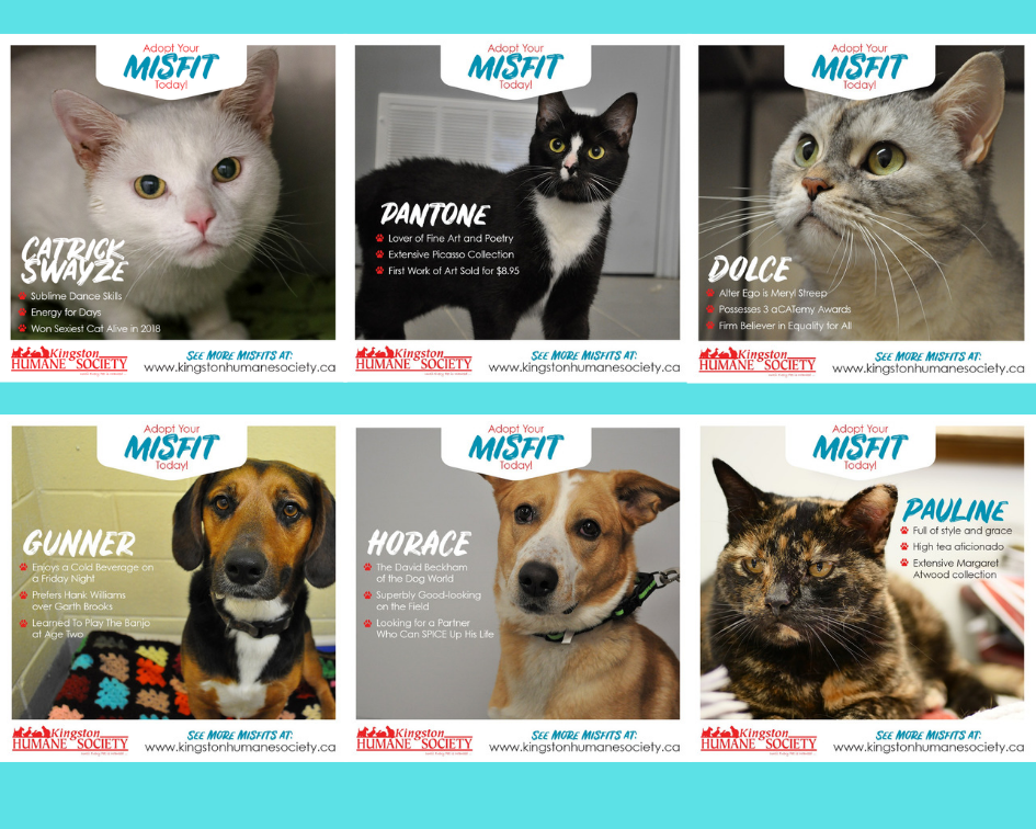 Kingston Humane Society launches 'Meet the Misfits' program