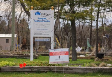 Kingston group calls on City to improve community gardens access and food security solutions