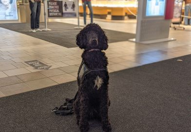 Indie the intervention dog training to comfort Kingston high school students